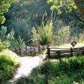 Atelier Formation : Tressage au jardin niveau 1 (RAYOL CANADEL SUR MER, 83)