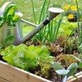 10ème Vies de jardin (SAINT-URCISSE, 81)