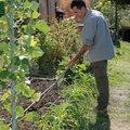Stage de Jardinage: le potager agroécologique en permaculture (SIMIANE LA ROTONDE, 04)