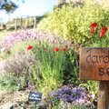 Journée Jardin sec (SIMIANE LA ROTONDE, 04)