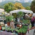 Fête aux Plantes Rares (CHâTILLON EN DIOIS, 26)