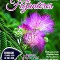 les florales de Figanières (FIGANIèRES, 83)