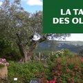 Atelier La taille des oliviers (SIMIANE LA ROTONDE, 04)