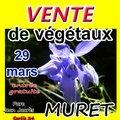 Expo vente de végétaux (MURET, 31)
