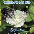 Fête des Plantes du Plessis Grammoire (49) (LE PLESSIS-GRAMMOIRE, 49)
