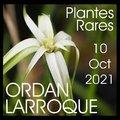 19ème journée des Plantes Rares (ORDAN-LARROQUE, 32)