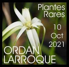 19ème journée des Plantes Rares