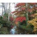 Arboretum des Prés des Culands - Conservatoire national d'Ilex (MEUNG SUR LOIRE, 45)