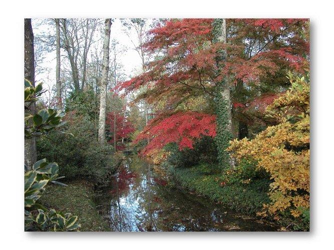 Arboretum des Prés des Culands - Conservatoire national d'Ilex