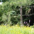 Parc botanique de Neuvic (NEUVIC-SUR-L'ISLE, 24)