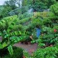 Jardin Des Paradis (CORDES SUR CIEL, 81)