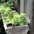 Réaliser une gouttière végétale avec des plantes grasses