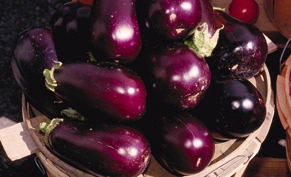 Quelles conditions pour semer des graines d'aubergine ?