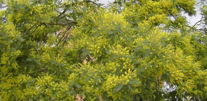 Floraison parfumée