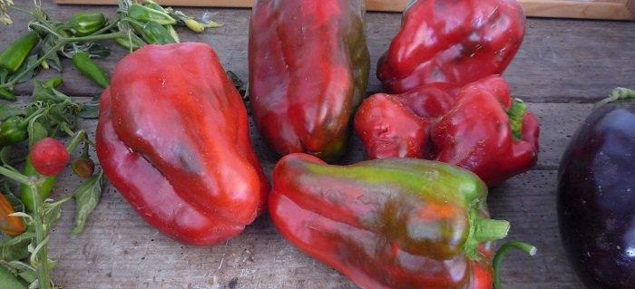 Semis réussis pour avoir de beaux fruits