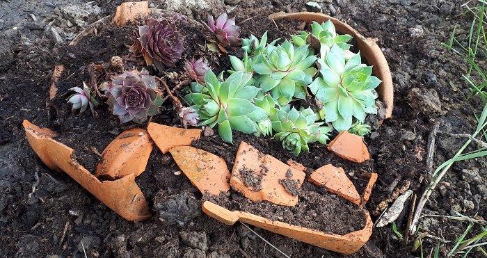 DIY : créer un mini jardin avec de la terre cuite récupérée