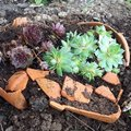 Recycler de la terre cuite en mini jardin décoratif