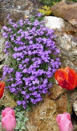 Quelles plantes installer pour fleurir un muret ?