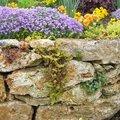 Comment fleurir un muret en pierres sèches ?