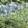 Les fleurs aux vertus répulsives