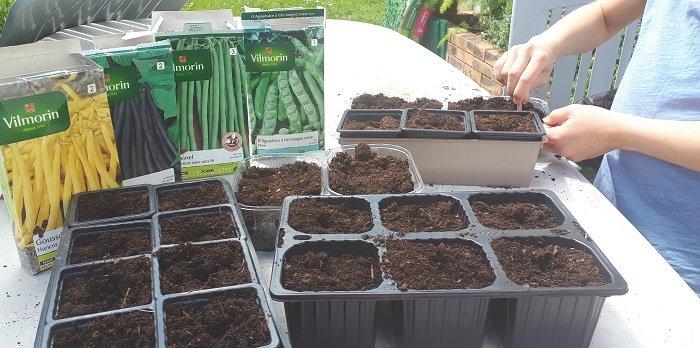 Tu sais quand semer les haricots ?