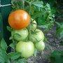 Quels légumes semer ou planter en juillet au jardin ?