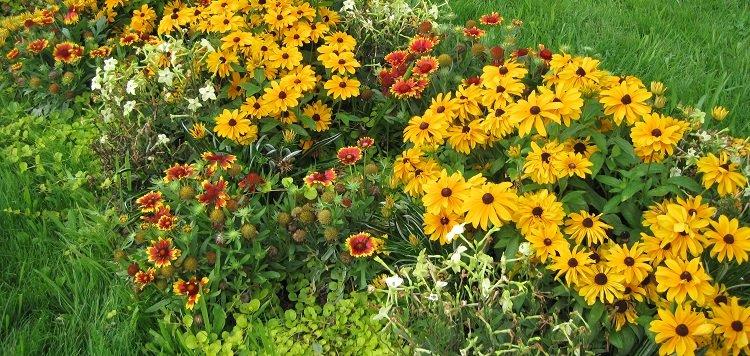 Vivaces à planter en septembre-octobre