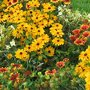 Quelles fleurs planter au jardin en septembre-octobre ?