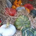 Automne 2009 - Fête des plantes - Fruits et légumes d'hier et d'aujourd'hui à Saint-Jean de Beauregard (91)