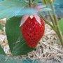Juillet : fruits et légumes de saison