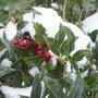 Les bons réflexes quand il neige au jardin