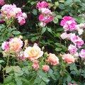 Quand tailler les arbustes à fleurs ?