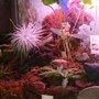Mon terrarium