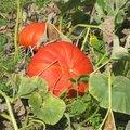 Fruits et légumes d'automne à Saint-Jean de Beauregard (91)