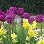 Plantation de bulbes de printemps : la bonne profondeur