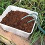 Comment recycler le marc de café au jardin ?
