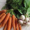 Les légumes primeurs