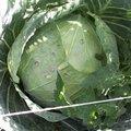 Quels légumes semer ou planter en février au jardin ?