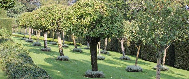Petites boules de santoline qui habillent le pied des pommiers au Jardin d'Eyrignac