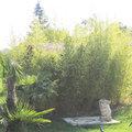 Haie de bambou comme écran de verdure