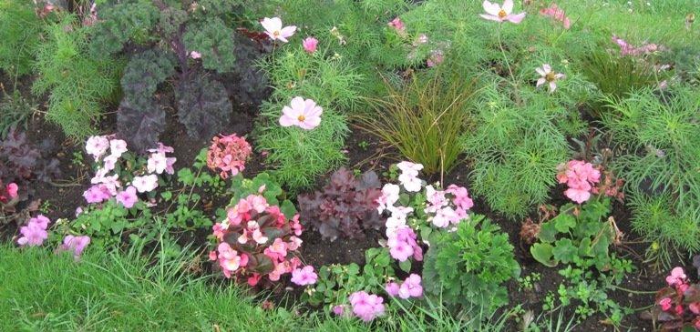 Un beau jardin avec des éléments nutritifs bien équilibrés