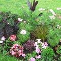 Engrais au jardin : le bon équilibre entre l'azote, le phosphore et le potassium