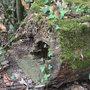 Accueillir la biodiversité au jardin