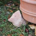 Pot de fleurs : lutter contre l'humidité excessive