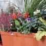 Jardinière d'hiver fleurie