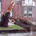 Dégâts après des vents violents