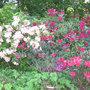 Le jardinage en mai