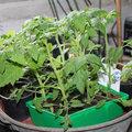 Le jardinage en juin
