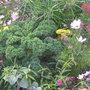 Des légumes dans les massifs ?