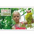 Timbres : grand choix de fruits à poster